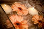 Floating Gerbera Daisies <br /> $40+
